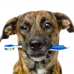 Provide Prophylactic Dental Cleaning for Your Pet